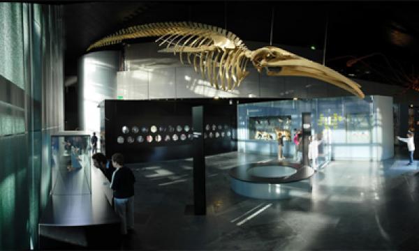 LE MUSEUM DE TOULOUSE |  CHATEAUX EN FRANCE